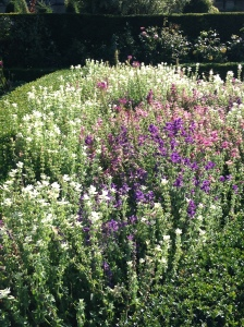 clary sage better