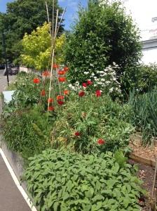 cleveland garden 4