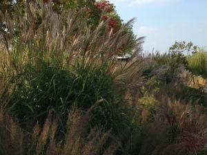 grasses olympic