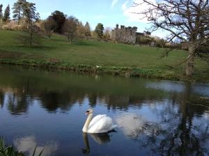 Gravetye 4 swan better