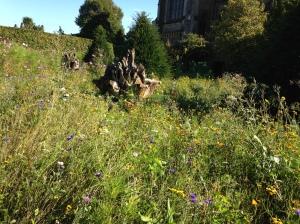 wildflowers 2 arundel