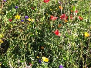 wildflowers arundel