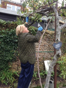 Katy rose pruning
