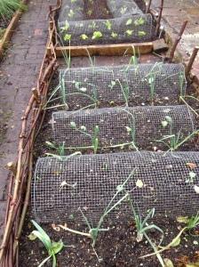 veg beds