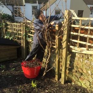 Ann pruning