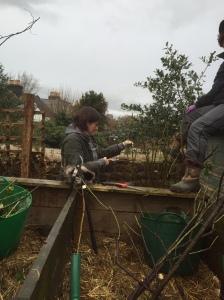 Hilary pruning