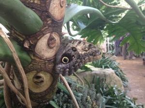 butterfly on trunk