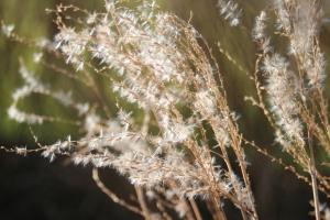 grasses Pat 2