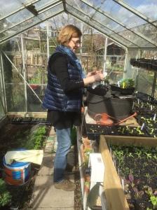 greenhouse Julia