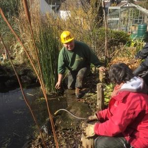 pond work 2