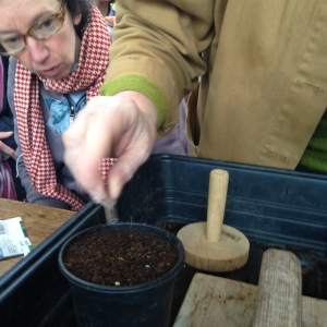 sowing 8