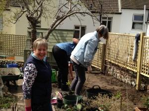 planting espalier