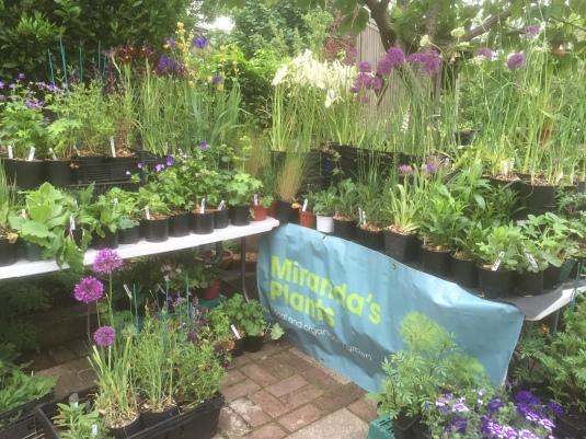miranda's plants