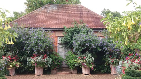 East Ruston Old Vicarage Garden.jpg