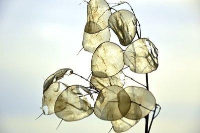 silver-leaf-3981360_640.jpg